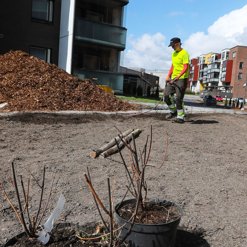 Puutarhuri istuttamassa kasveja taloyhtiön pihalla. Kasvien alle levitetään kuorikatetta ja istutukset kastellaan.